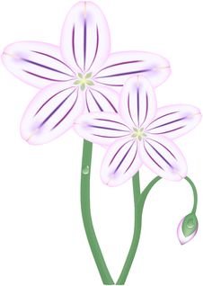 Free Purple Spring Flowers Stock Images - 8143974