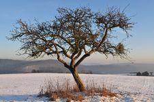 Free Tree Stock Image - 8147561