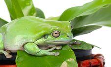 Free Frog Stock Photos - 8148103