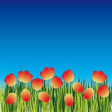 Free Background With Flower Royalty Free Stock Photo - 8148505