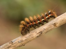 Free Caterpillar Stock Images - 8149054