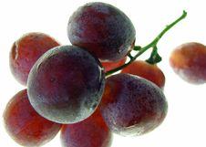 Free Fresh Grapes Stock Photo - 8149070
