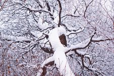 Free Park And Snow Stock Image - 8149091