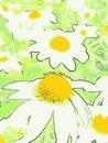 Free Daisy Stock Images - 8152984