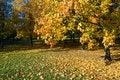 Free Gold Autumn Royalty Free Stock Photo - 8159765