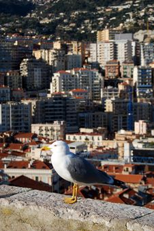 Free Sea Gull Royalty Free Stock Images - 8150829