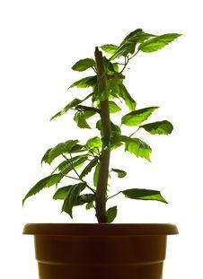 Free Plant Royalty Free Stock Image - 8152106