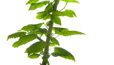 Free Plant Stock Photography - 8152772