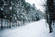 Free Winter Forest, Snow Covered Trees In The Wood Royalty Free Stock Photos - 8154238