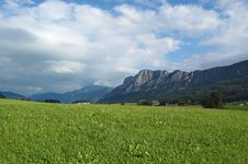 Free Alpine Grass Stock Photography - 8154622