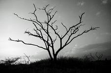 Free Tree Stock Image - 8154821