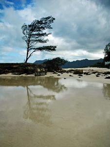 Free Bending Tree Beach Stock Photos - 8155543