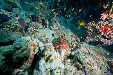 Free Couple Of Smallscale Scorpionfishes Stock Photo - 8155570