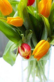 Free Tulips In The Glass Vase Royalty Free Stock Images - 8156369