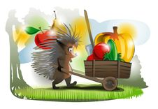 The Hedgehog Carries Royalty Free Stock Photo