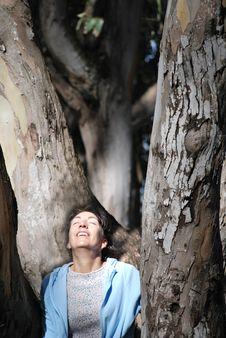 Sunning Among The Eucalyptus Trees Stock Photography
