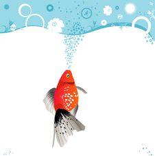 Free Orange Fish Royalty Free Stock Photos - 8156948