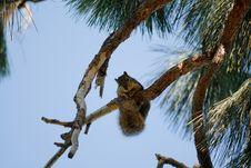 Free Hanging Around Royalty Free Stock Images - 8157309