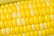 Free Corn Maze Stock Images - 8158054