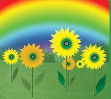 Free Sunflowers Stock Image - 8158081