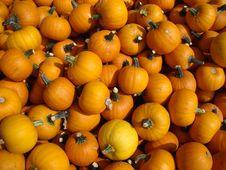 Free Pumpkins Stock Image - 8158431
