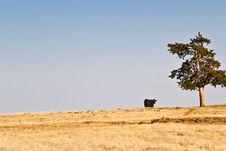 Free Cow On The Horizon Stock Photo - 8159190
