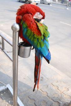 Free Parrot Royalty Free Stock Photos - 8159618