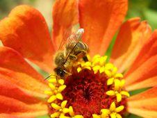 Free Bee Stock Photo - 8159680