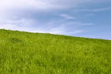 Free Green Grass Field Royalty Free Stock Photos - 8159698