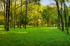 Free Morning In Forest Royalty Free Stock Photos - 8159748