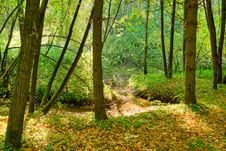 Free Brook In The Forest Stock Photography - 8159752