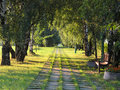 Free Summer Green Tree Alley Royalty Free Stock Photography - 8161017