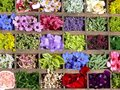 Free Flowers Of Summer Royalty Free Stock Photography - 8163717
