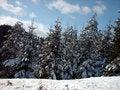 Free Trees Royalty Free Stock Photos - 8165158