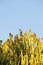 Free Cactus Stock Photo - 8169080