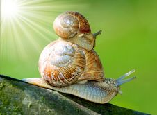 Free Snails Royalty Free Stock Image - 8160636