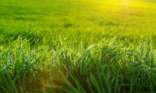 Green Lawn Royalty Free Stock Images