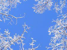 Free Snowy Treetops Stock Photo - 8161840