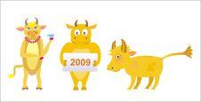 Free Bulls Stock Photo - 8162370