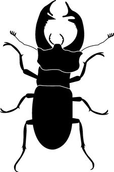 Free Stag Beetle Stock Image - 8165191