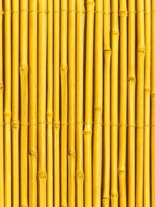 Free Bamboo Tree Trunks Stock Photo - 8165480