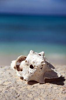 Tropical Island  Scene With Seashell Royalty Free Stock Photo