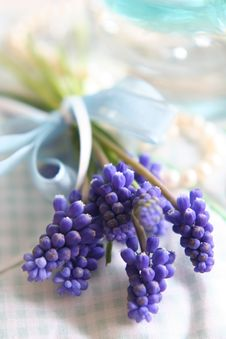 Free Spring Lilac Flowers Royalty Free Stock Image - 8165716
