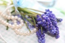 Free Spring Gift Stock Image - 8165811