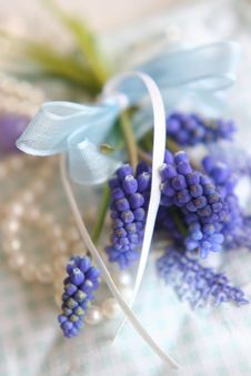 Free Spring Lilac Flowers Stock Images - 8165854