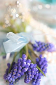 Free Spring Flowers Royalty Free Stock Images - 8165879
