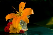 Free Day Lilly In Miniature Pitcher Royalty Free Stock Photography - 8166717