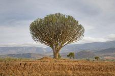 Free Cactus Acacia Stock Images - 8166784