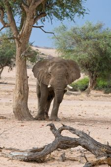 Free Elephant Standing By Tree Royalty Free Stock Photography - 8166917