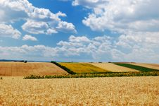 Free Colorful Fields Royalty Free Stock Photos - 8167058